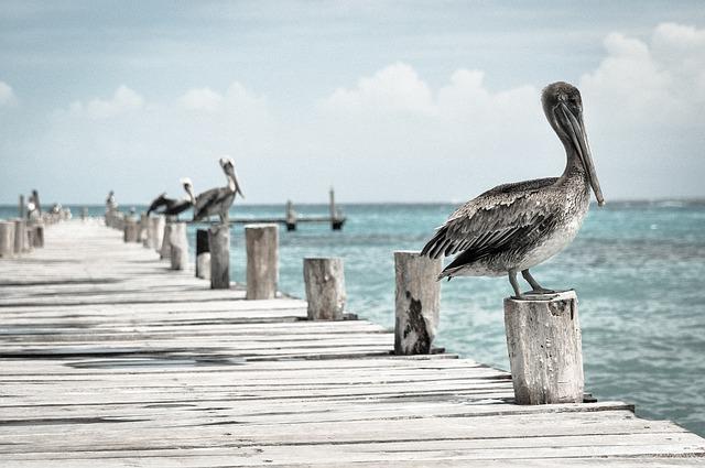 Pelican on doc