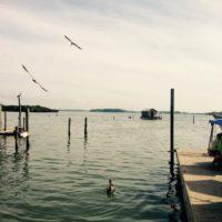 star-fish-company-docks