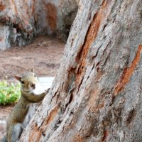 friendly-squirrel3