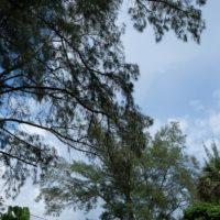 abandoned-herons-nest-jpg