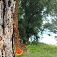 mister-lizard-jpg