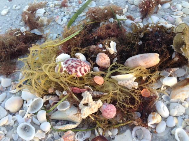 Morning Beach Shells