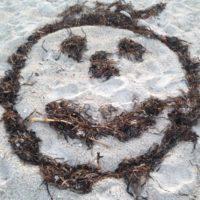 seaweed-smiley-jpg